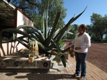 An agave plant that produces many things.